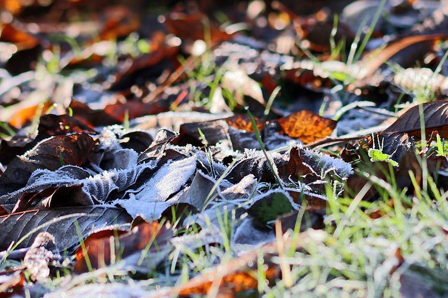 Внимание! По ночам в ближайшие выходные в Клинцах и Клинцовском районе ожидаются заморозки!