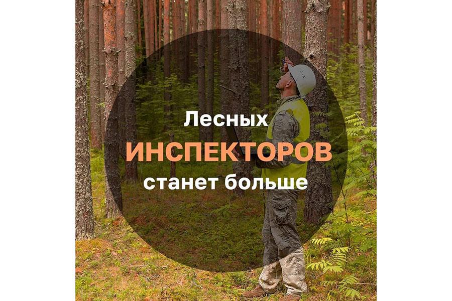 Профессия лесного инспектора вновь станет престижной